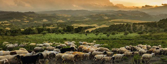 Boden im Ausverkauf: Land-Grabbing nimmt stark zu