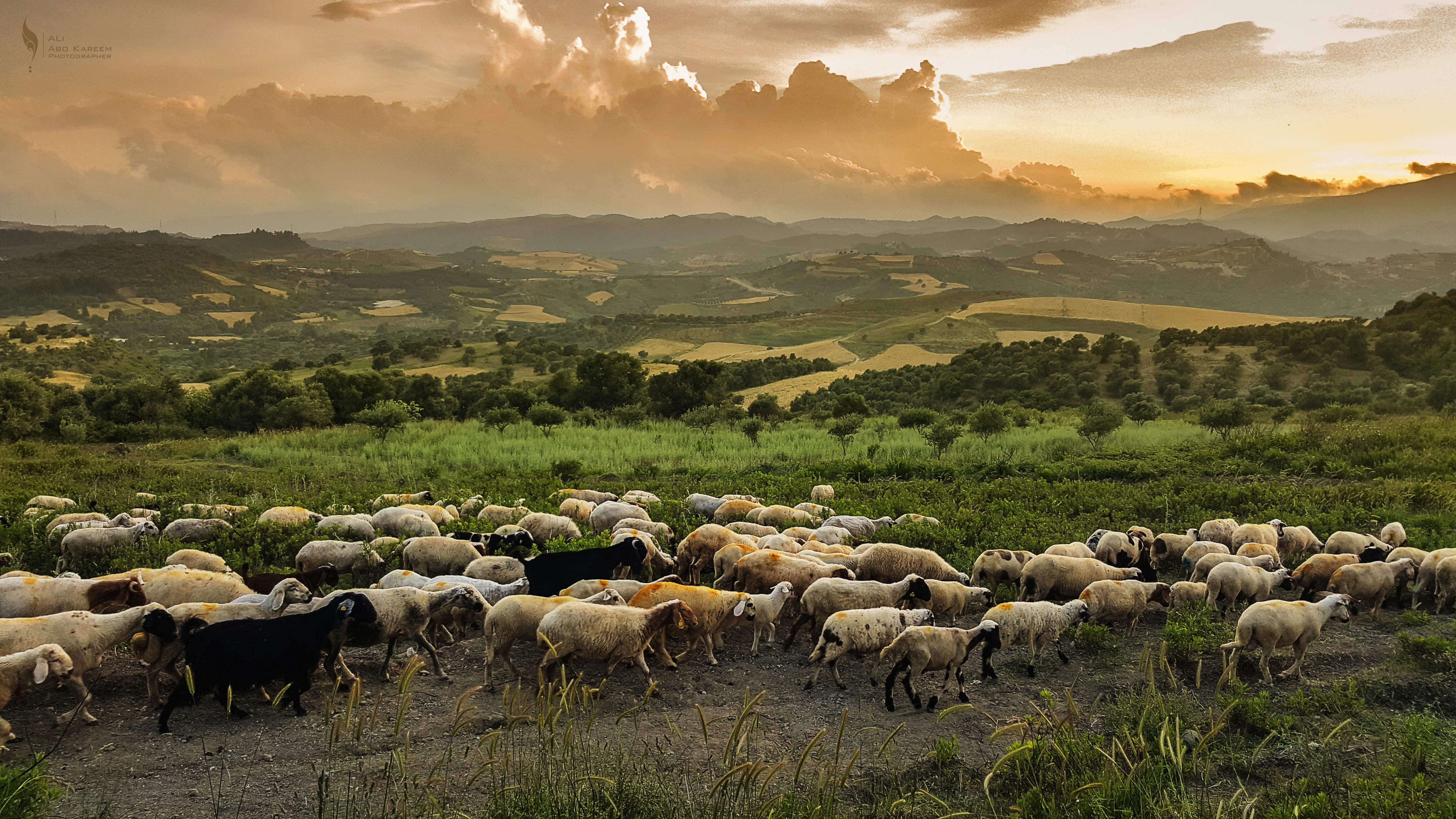 Herdenverhalten, land grabbing
