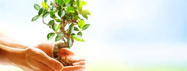 Holzinvestments: Bring dein Geld in den Wald. Bringt das denn etwas?