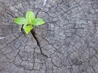 Eine neue Wirtschaft denken: Kippen wir nun den ständigen Wachstumsmodus?